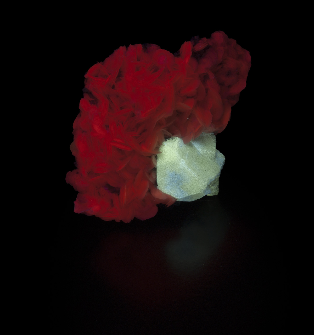 Scheelite on Calcite - shortwave