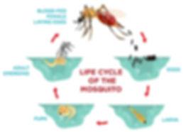 Mosquito JAK