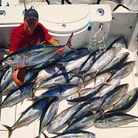 Yellowfin Tuna Limits