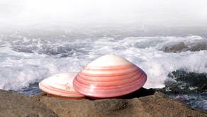 The Spa Guide – Blog 04 – Lava Shells