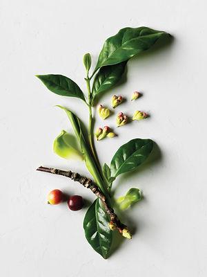 AVEDA Herbs