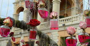 Rose de Grasse, the 100 Petalled Rose