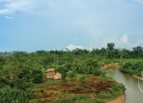 Cœur de Forêt & All4trees : Sauvons les peuples amérindiens