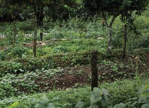 Nourrir l'humanité grâce aux forêts, une utopie ?