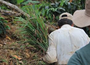 Appuyer les producteurs Boliviens avant et après le Covid-19 ?