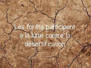 La désertification va affecter nos vies. Mais comment ?
