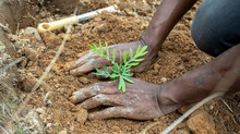 Reboisement annuel de l'équipe Coeur de Forêt Madagascar