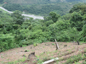 Un gramme de cocaïne c'est 4 m2 de déforestation !