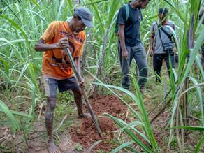Saison des plantations à Madagascar, Antsirabe