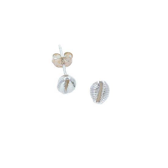 Silver Sennen Cowrie Shell stud earrings