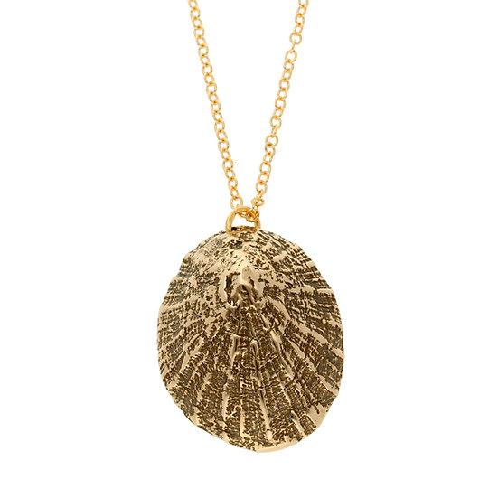 Bronze Sennen Limpet shell pendant