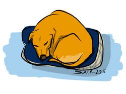 Chien qui dort dans son panier