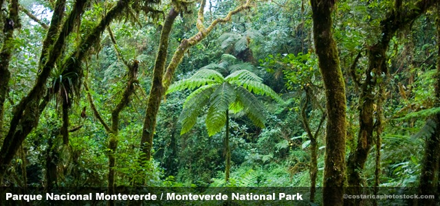 PNmonteverde