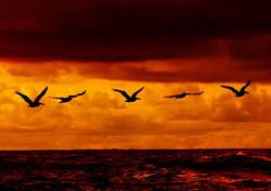Sunset - Bird