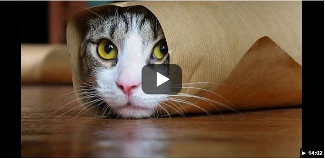 Netari Blog - 5G Networks Will Do Much More Than Stream Better Cat Videos