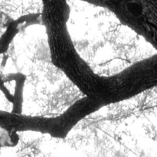 ReachArchitects-Woodcraft-TreeWall-01.jpg