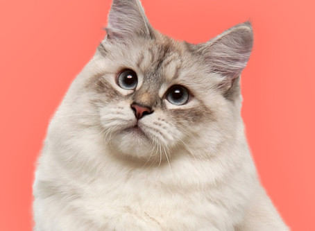 Weight loss is the #1 sign of cancer in cats. What else should you be watching for?
