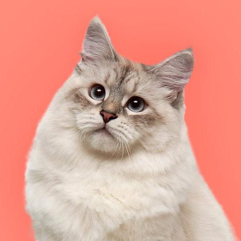 Adopt a Cat Castle