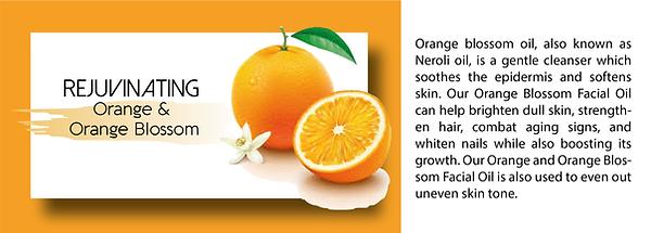 Hoelsons website graphics_Orange.png