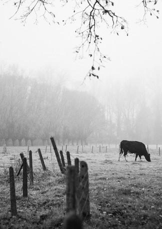 Une vache peut en cacher une autre - 2020