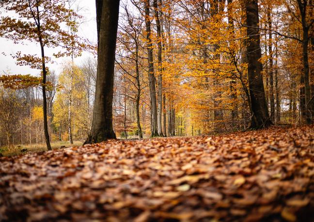 Low perspectif in Autumn - 2020