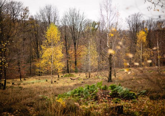Plant een bos - 2020