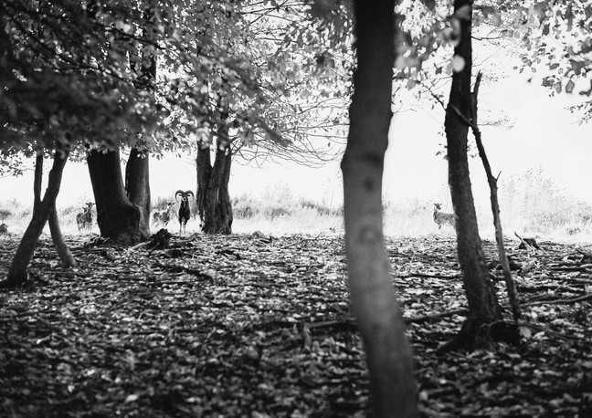 Hiding in the woods - 2013
