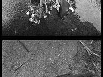 Graveyard. March