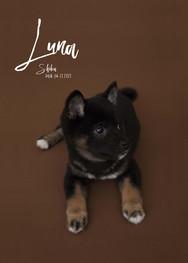 luna_portrait.artboad.jpg