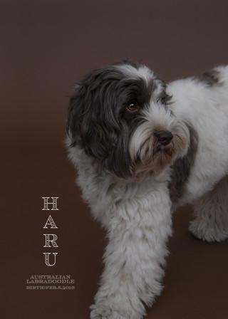 Thank you dear Haru