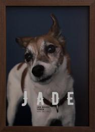 Thank you dear JADE !