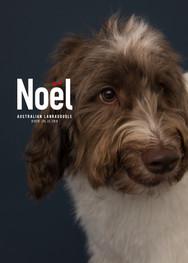 Noel_portraitC_artboad.jpg