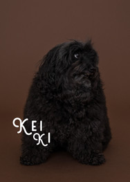 keiki_portrait2_artboad.jpg