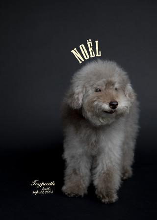Thank you dear Noël