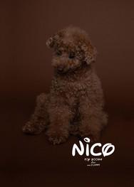 nico_portraitB_artboad.jpg