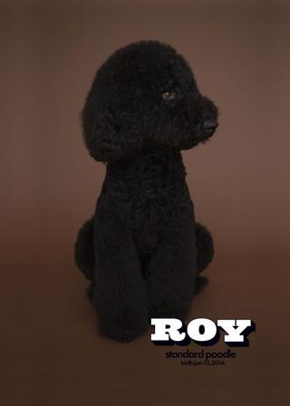 Thank you dear Roy
