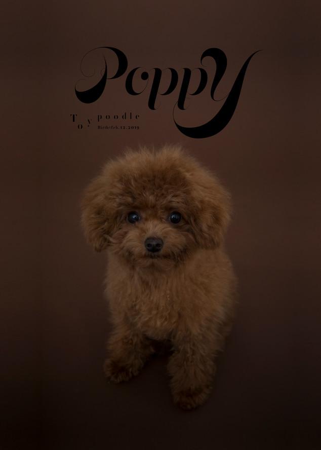 Thank you dear Poppy