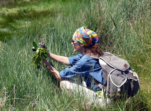Ouverture de nouvelles balades botaniques