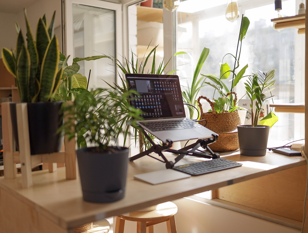A wooden desk in a brightly-lit room surrounded by houseplants. In the middle of the desk is a laptop stand with an open laptop.