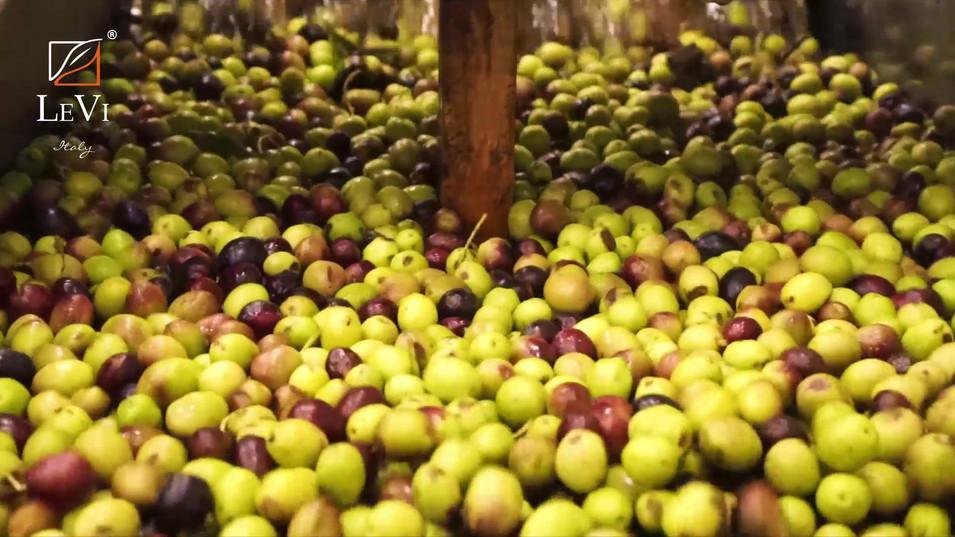 Le Olive in Frantoio, vengono lavate prima della Molitura - Olio LeVi