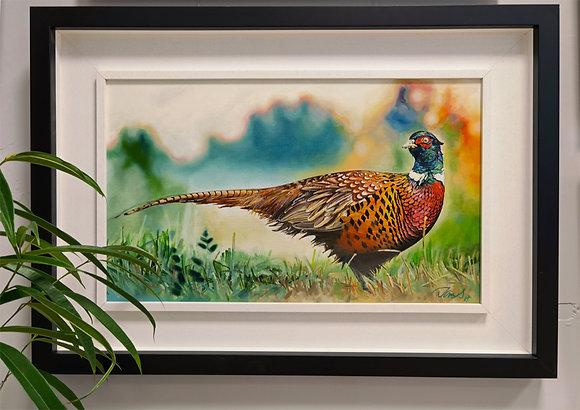 """""""Pheasant"""" Framed Oil by James Summerbell"""