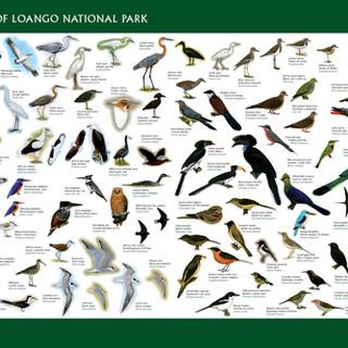 Loango poster birds big.jpg