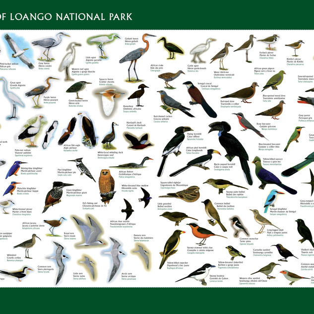 Loango poster birds big.jpg