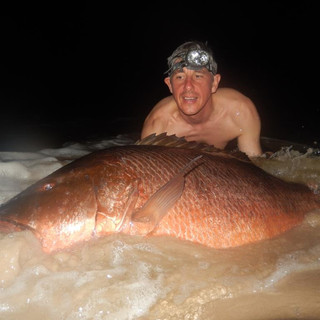 Large Snapper of the beach.
