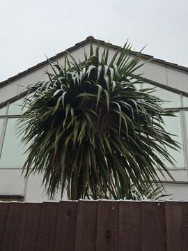 winter_palm