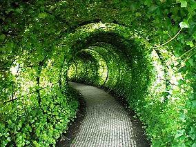 inspiration - garden - gardening - flowe