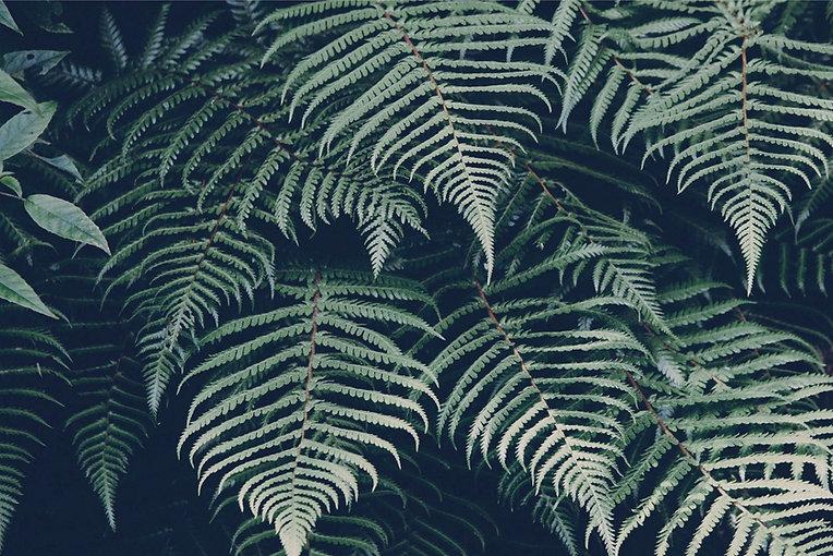 Tropical%2520Plant_edited_edited.jpg