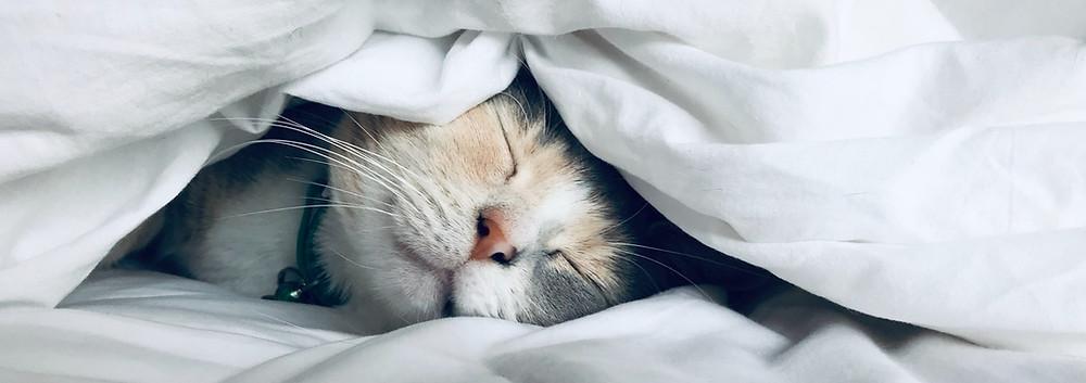 A cat sleeping under a duvet