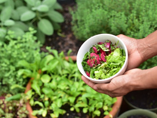3 Reasons to Grow Your Own Veg