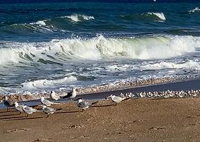 Beach w Mamas and baby birds.jpeg